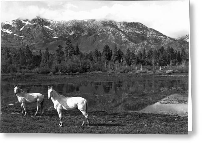 Two White Horses By A Pond Greeting Card