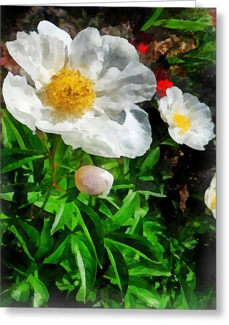 Two White Poppies Greeting Card by Susan Savad