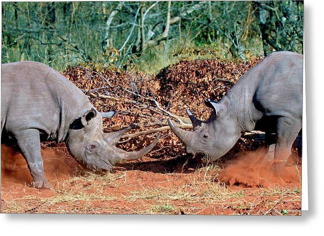 Two White Rhinoceros, Square Lipped Greeting Card