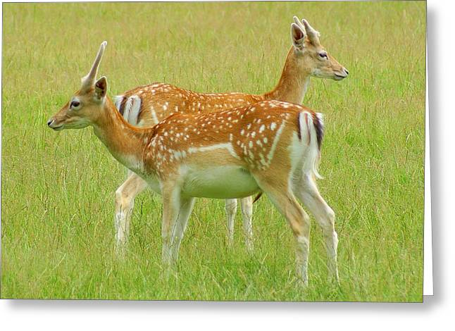 Two Young Deer Greeting Card by DerekTXFactor Creative