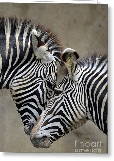 Two Zebras Greeting Card by Mark Newman