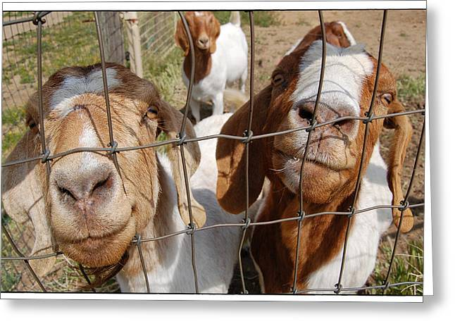 Twogoats Greeting Card