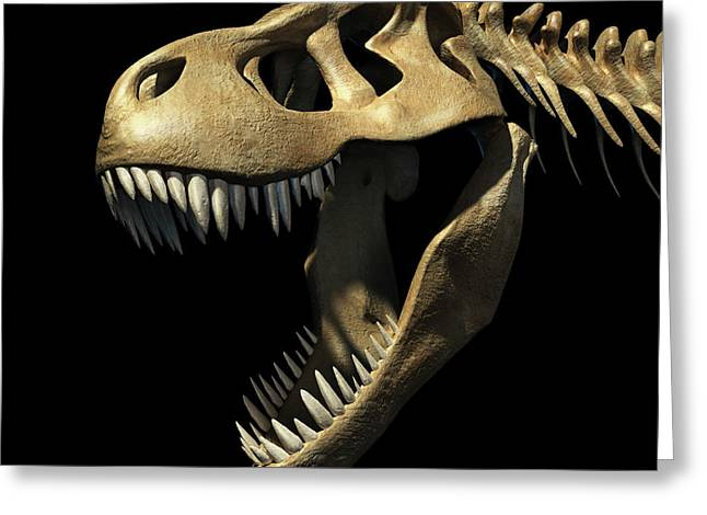 Tyrannosaurus Rex Skull Greeting Card by Leonello Calvetti