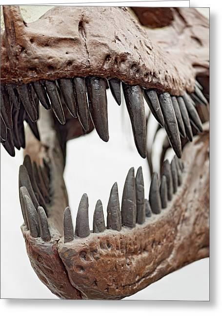 Tyrannosaurus Skull Showing Teeth Greeting Card by Dorling Kindersley/uig