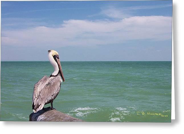 Ubiquitous Pelican Greeting Card