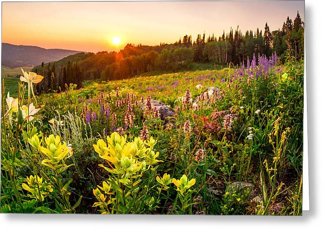 Uinta Wildflowers Greeting Card