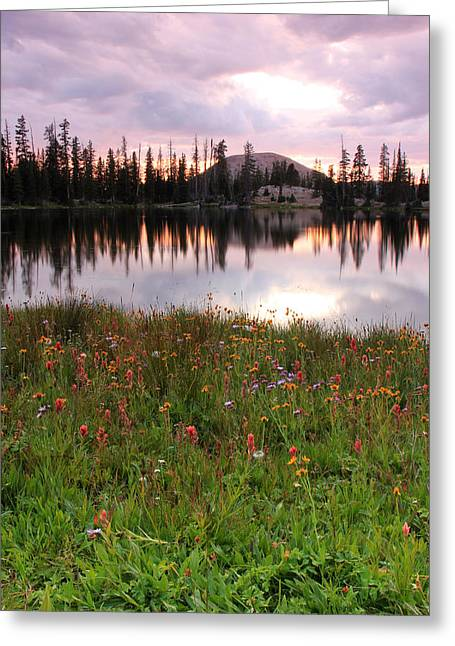 Uinta Wildflowers Greeting Card by Johnny Adolphson