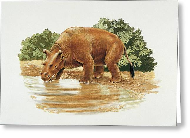 Uintatherium Greeting Card by Deagostini/uig/science Photo Library