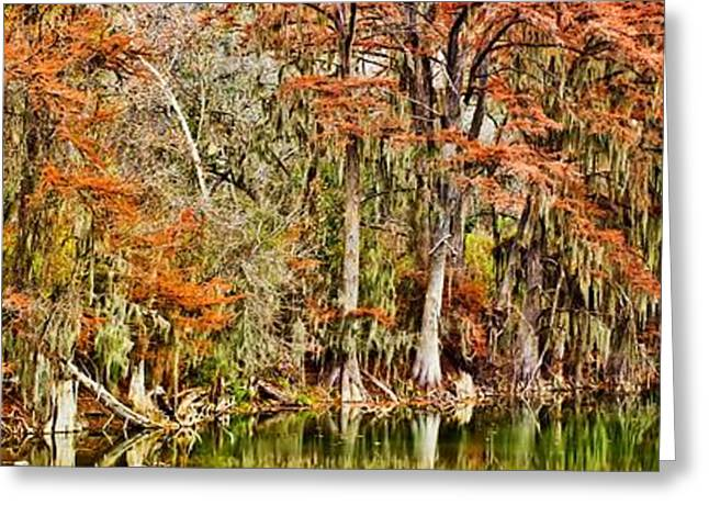 Ultimate Cypress Panoramic Greeting Card
