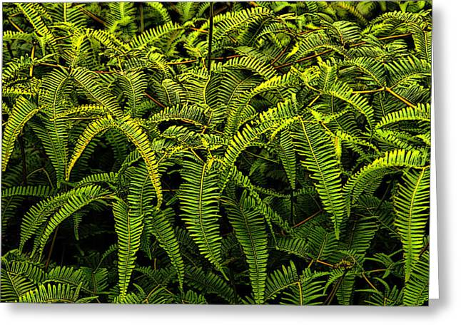 Uluhe Fern Greeting Card