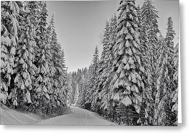 Umatilla Forest Trail In Black And White Greeting Card by Lynn Hopwood