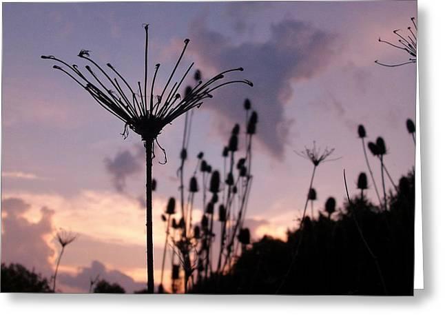 Umbrella In The Wind 2 Greeting Card by Elizabeth Sullivan