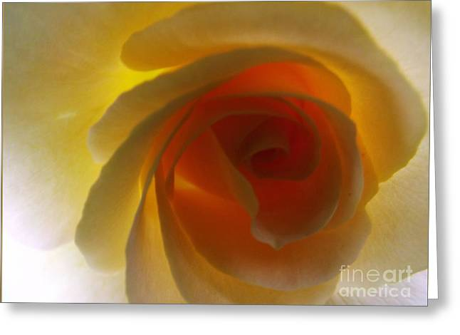 Greeting Card featuring the photograph Unaltered Rose by Robyn King