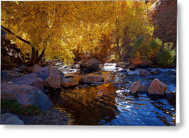 Under A Gold Canopy Greeting Card by Jim Garrison