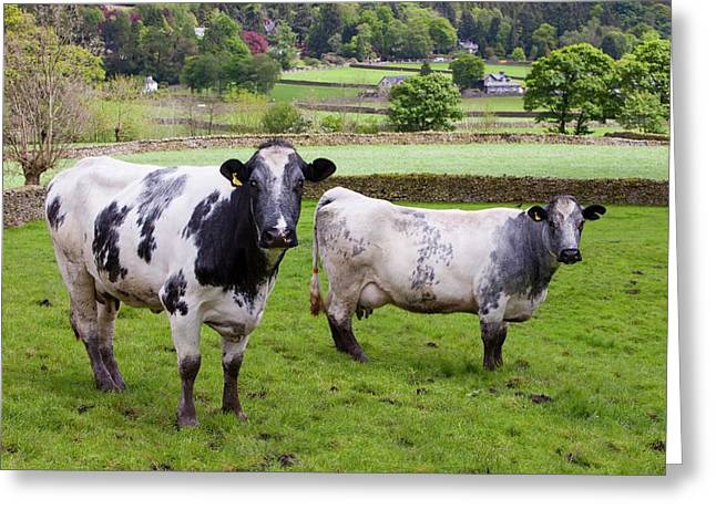 Under Helm Farm Greeting Card by Ashley Cooper