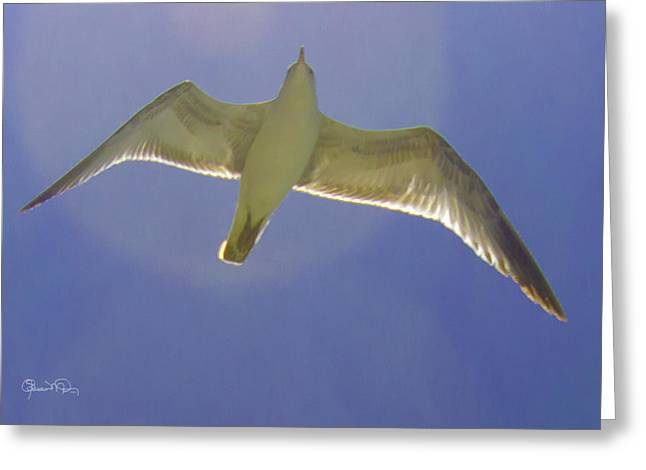 Under His Wings IIi Greeting Card