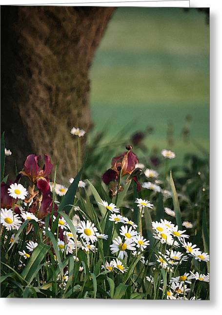 Greeting Card featuring the photograph Under The Apple Tree by Penny Hunt