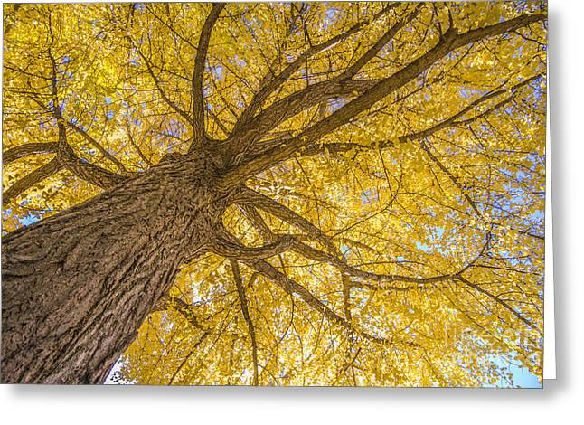 Under The Autumn Tree Greeting Card