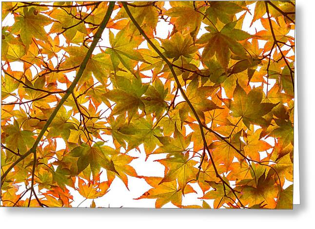 Under The Autumnal Japanese Maple - Impressions Of Fall Greeting Card