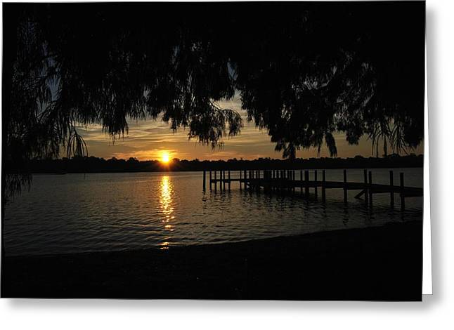 Under The Bald Cypress Greeting Card