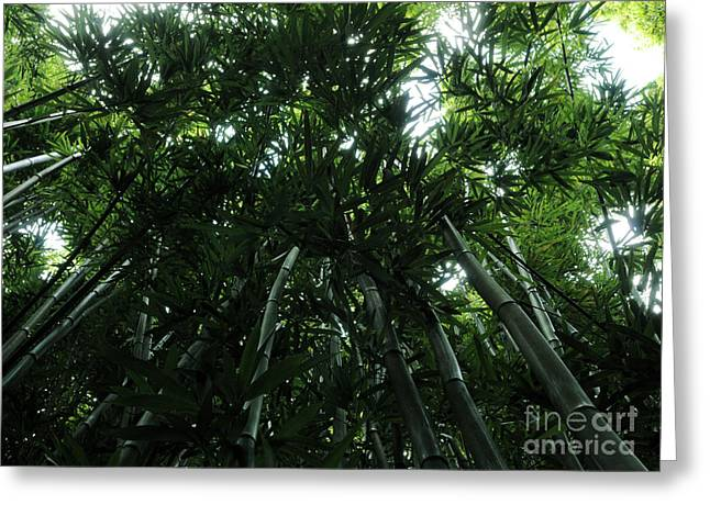 Greeting Card featuring the photograph Under The Bamboo Haleakala National Park  by Vivian Christopher