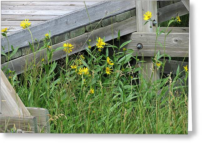 Greeting Card featuring the photograph Under The Boardwalk by Laurel Powell