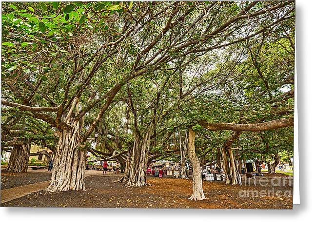 Under The Canopy - Banyan Tree Park In Maui. Greeting Card
