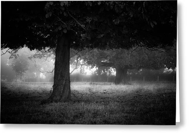 Under The Dark Canopy Greeting Card