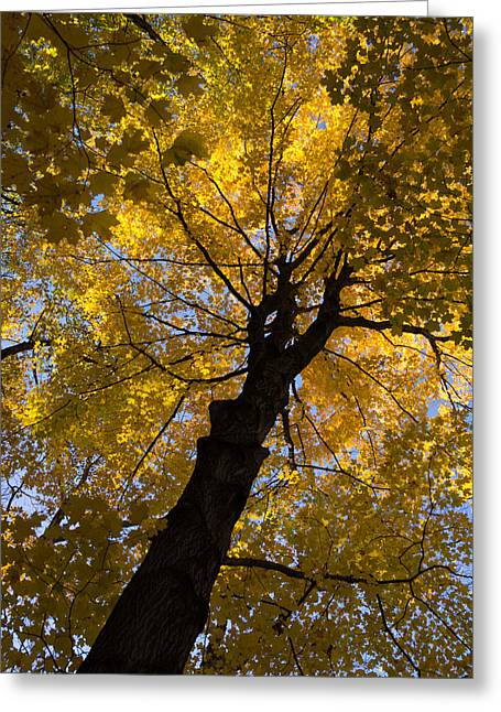 Under The Golden Autumn Canopy Greeting Card