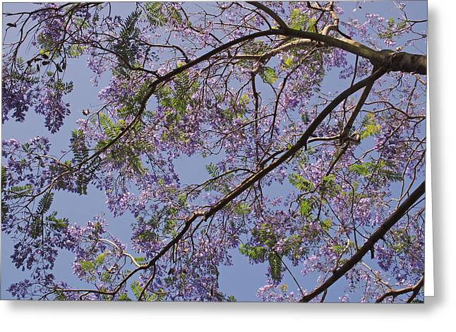 Under The Jacaranda Tree Greeting Card