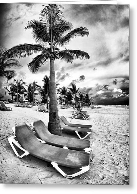 Under The Palm Tree Greeting Card by John Rizzuto
