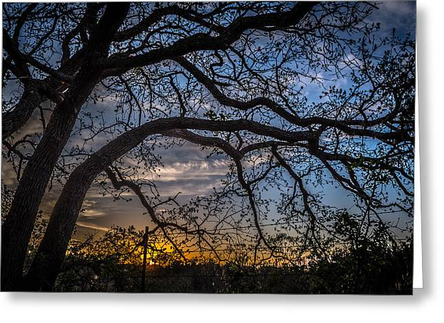 Under The Tree And Through The Fence Greeting Card by Kelly Kitchens