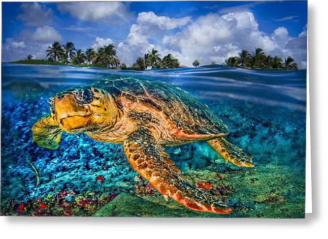 Under The Waves Greeting Card by Debra and Dave Vanderlaan