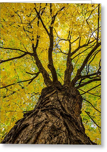 Under The Yellow Canopy Greeting Card