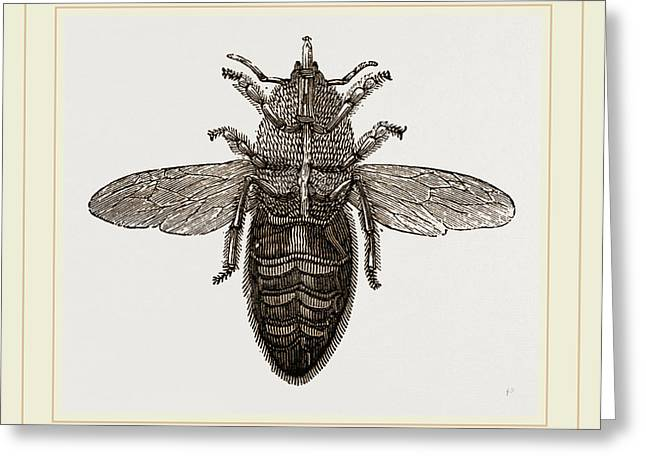 Under View Of Neuter Bee Greeting Card by Litz Collection
