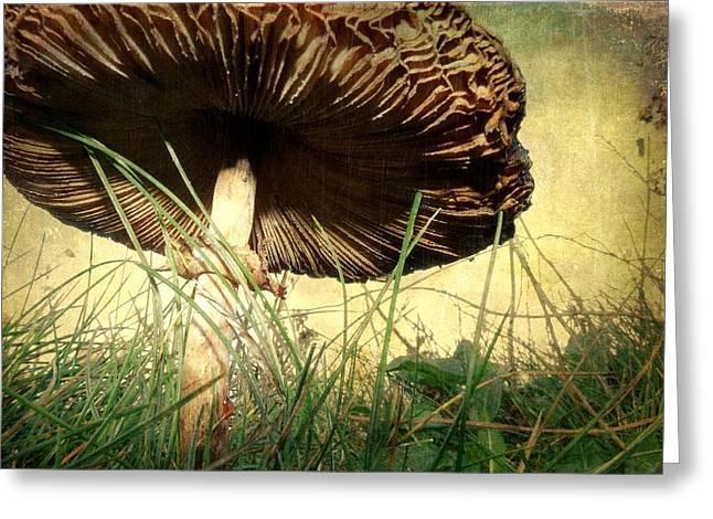 Underneath The Mushroom Greeting Card