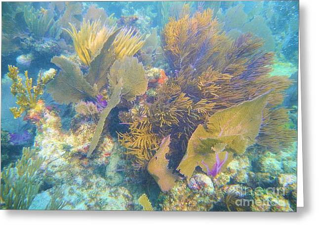 Undersea Forest Greeting Card by Adam Jewell