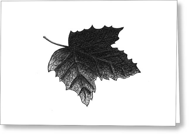 Underside Of A Leaf Greeting Card by Adam Vereecke