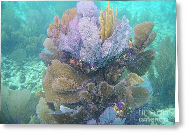 Underwater Bouquet Greeting Card by Adam Jewell