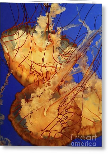 Underwater Friends - Jelly Fish By Diana Sainz Greeting Card by Diana Sainz