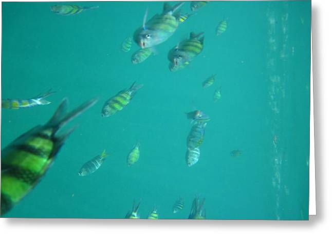 Underwater - Long Boat Tour - Phi Phi Island - 011320 Greeting Card by DC Photographer