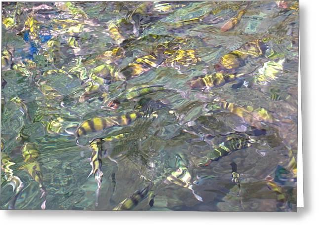 Underwater - Long Boat Tour - Phi Phi Island - 011325 Greeting Card