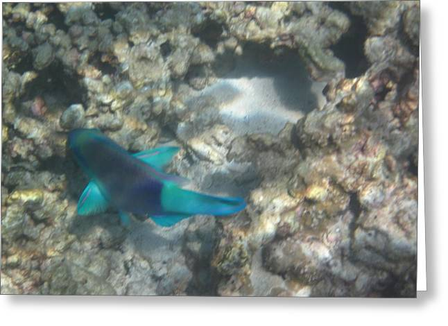 Underwater - Long Boat Tour - Phi Phi Island - 011359 Greeting Card by DC Photographer