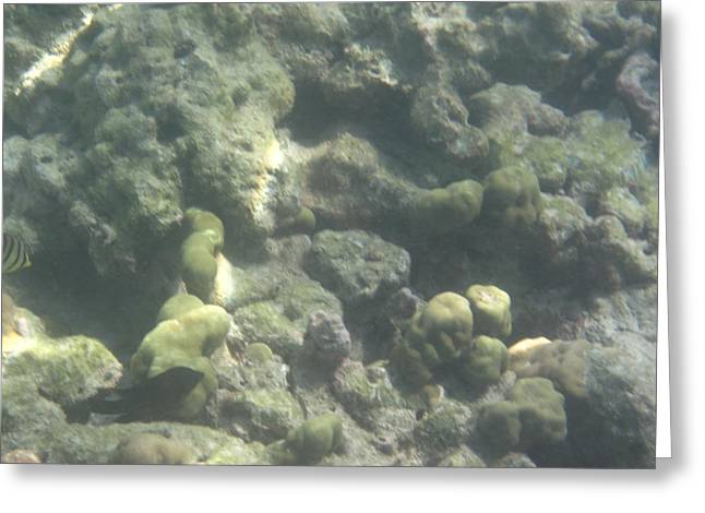 Underwater - Long Boat Tour - Phi Phi Island - 011367 Greeting Card