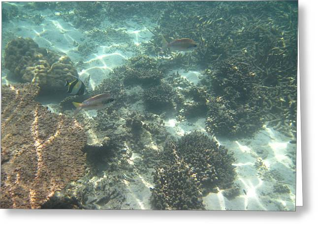 Underwater - Long Boat Tour - Phi Phi Island - 011377 Greeting Card by DC Photographer