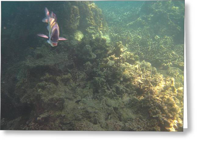 Underwater - Long Boat Tour - Phi Phi Island - 011380 Greeting Card