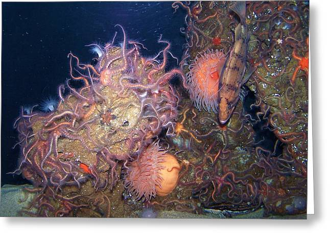 Greeting Card featuring the photograph Underwater Sea Life by Christine Drake