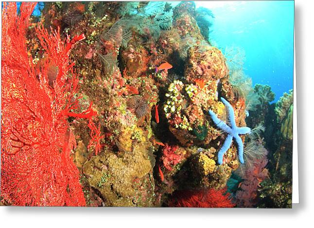 Underwater View Of Red Sea Fans Greeting Card