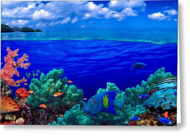 Underwater View Of Yellowbar Angelfish Greeting Card by Panoramic Images