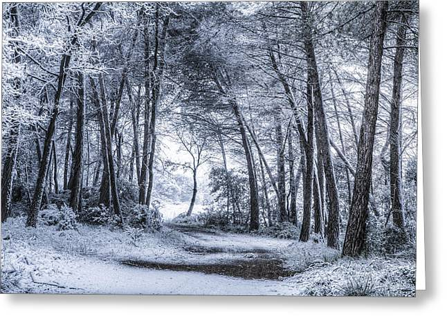 Unexpected Snowfall Greeting Card by Marc Garrido